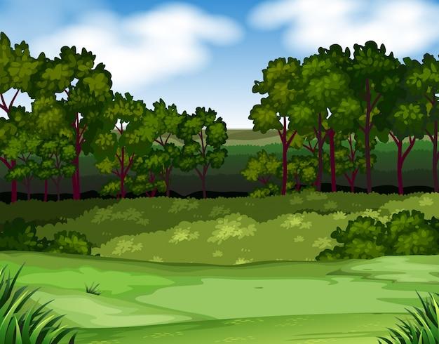 Waldszene mit bäumen und feldhintergrund Kostenlosen Vektoren