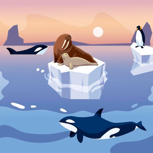 Walross und pinguin auf eisberg-orca-walen in der seeillustration Premium Vektoren