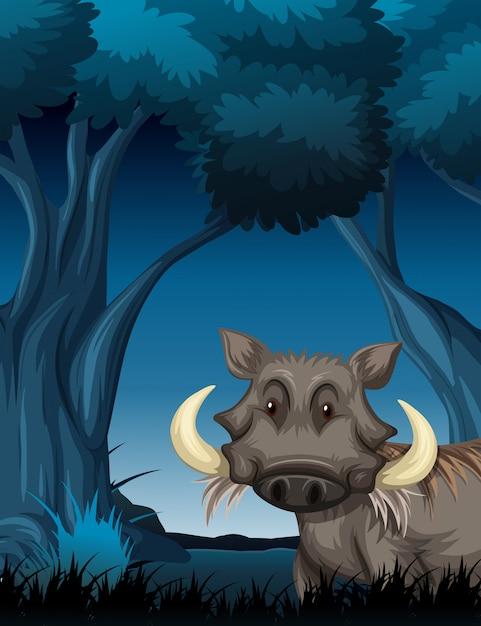 Warzenschwein in der nachtaufnahme Premium Vektoren