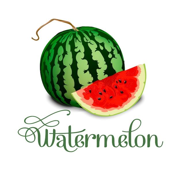 Wassermelone Premium Vektoren