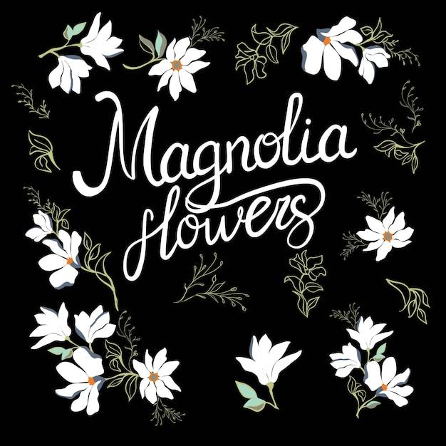 Webstuhlblumen der magnolie auf der niederlassung lokalisiert auf weiß Premium Vektoren