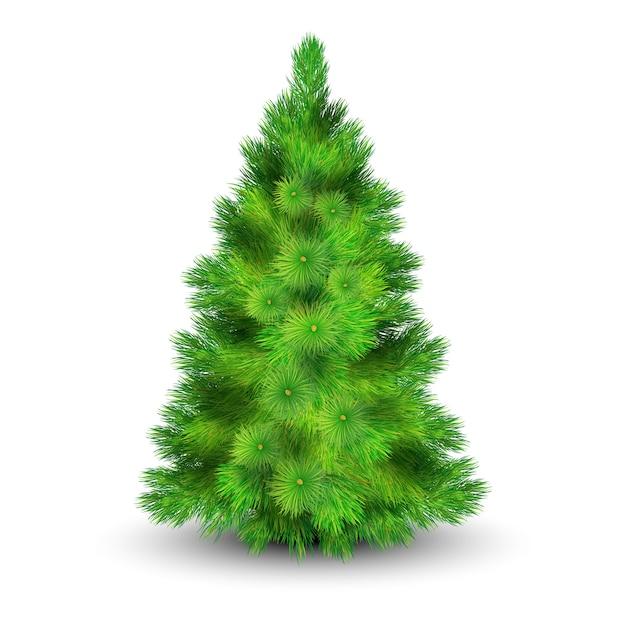Weihnachtsbaum mit grünen niederlassungen für die verzierung der realistischen vektorillustration des hauses Kostenlosen Vektoren