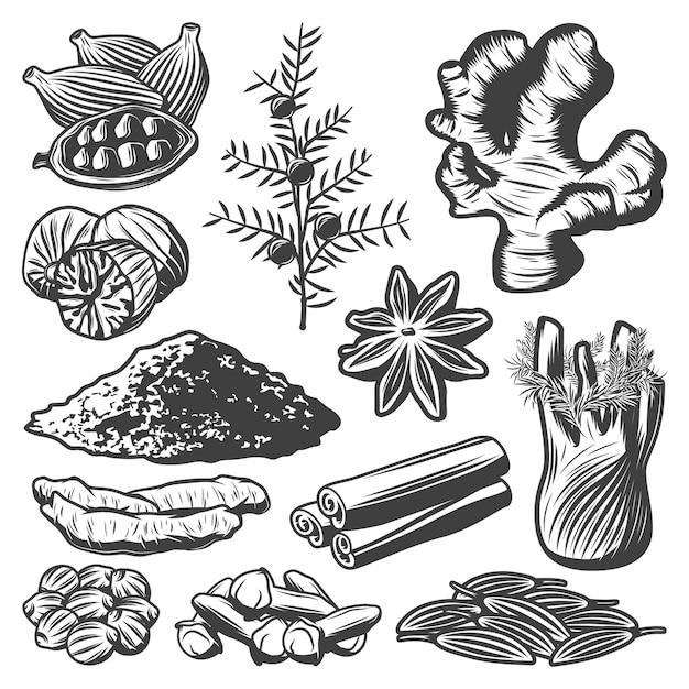 Weinlese-gewürzsammlung mit kreuzkümmel-muskat-sternanis-kardamom-fenchel-zimtpulver-rosmarin-ingwer-kurkuma-nelken-koriander isoliert Kostenlosen Vektoren