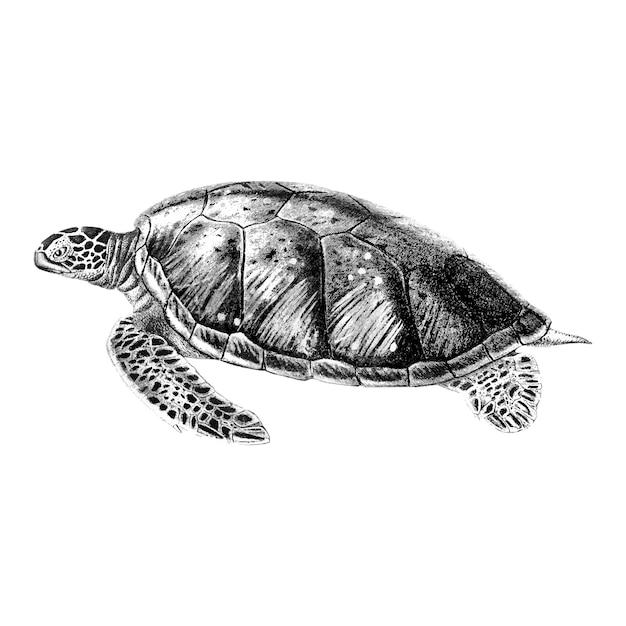 Weinleseillustrationen der grünen meeresschildkröte Kostenlosen Vektoren