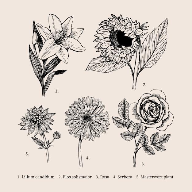 Weinlesezeichnung mit botanikblumensammlung Kostenlosen Vektoren
