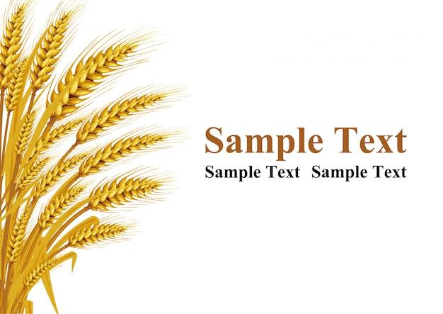 Weizen auf dem hintergrund in der linken ecke bietet platz für die texteingabe. vektorabbildungen Premium Vektoren