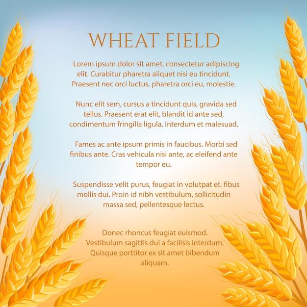 Weizenfeldkonzept mit platz für text Premium Vektoren