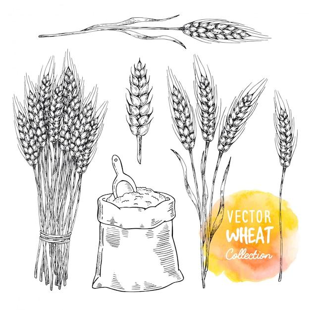 Weizensatzelemente. garbe weizen und mehlbeutel mit schaufel. Premium Vektoren