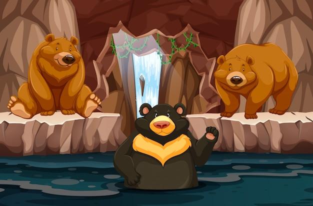Wilde bären in der unterirdischen höhle mit wasser Premium Vektoren