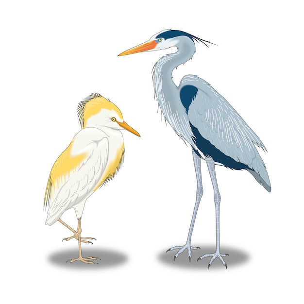 Wilde große vögel, die nahe am wasser leben Premium Vektoren