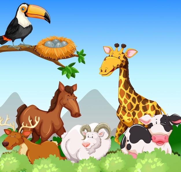 Wilde tiere auf dem gebiet Kostenlosen Vektoren