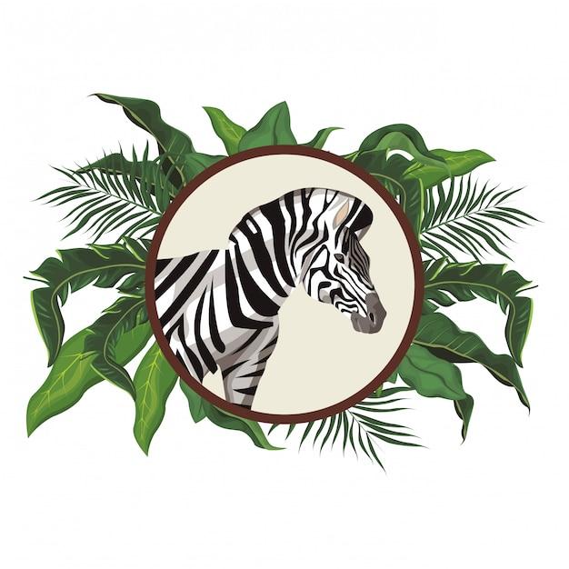 Wildes tier des zebras Premium Vektoren
