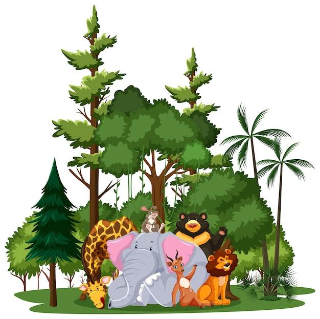 Wildtier- oder zootiergruppe mit naturelementen auf weißem hintergrund Kostenlosen Vektoren