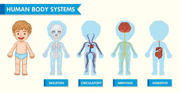 Wissenschaftliche medizinische infografik des menschlichen körpers bei kindern Kostenlosen Vektoren