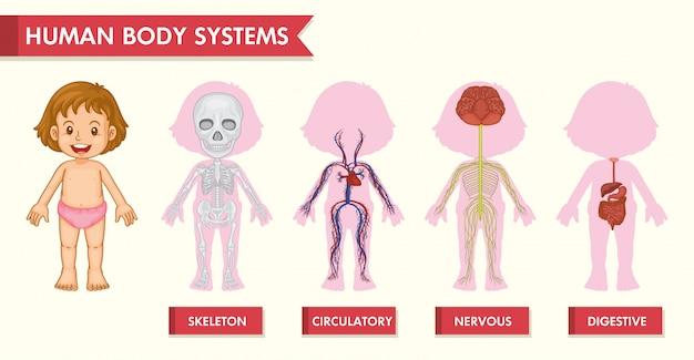 Wissenschaftliches medizinisches infographic von mädchenmenschensystemen Kostenlosen Vektoren