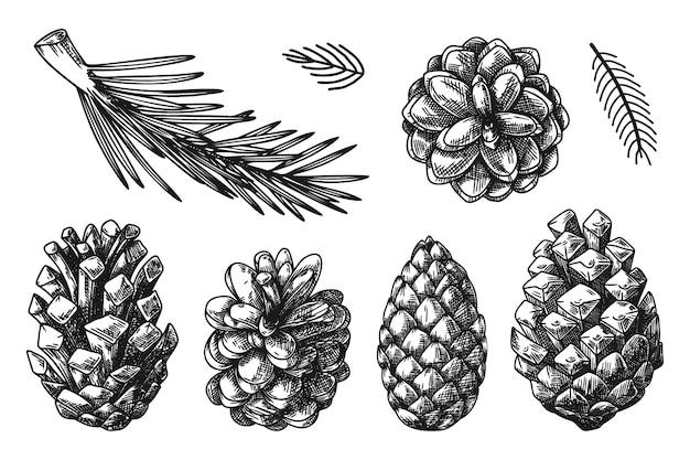 Zapfen und zweige verschiedener pflanzen lokalisiert auf weißem hintergrund. skizze, illustration von hand gezeichnet Premium Vektoren