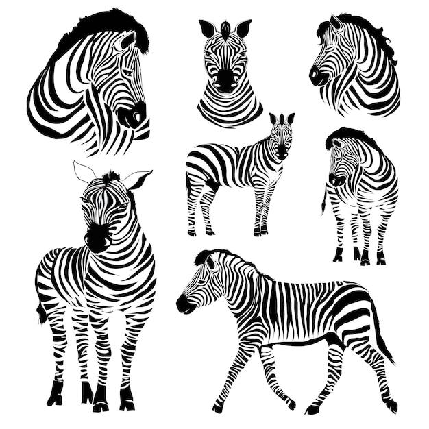 Zebra-illustrationen Premium Vektoren