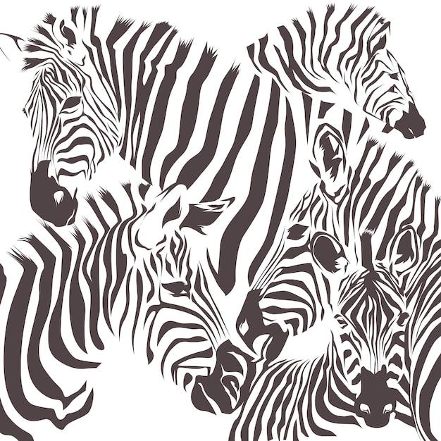 Zebra tier vektor Premium Vektoren