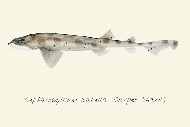 Zeichnung eines carpert sharks Premium Vektoren
