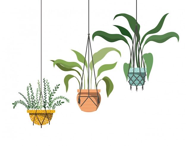 Zimmerpflanzen auf makramee kleiderbügel symbol Premium Vektoren