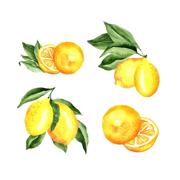 Zitronen-arrangement-aquarell-satz Kostenlosen Vektoren