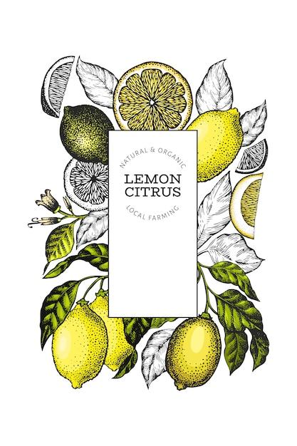 Zitronenbaum-frame-vorlage. hand gezeichnete fruchtillustration. gravierte stil banner. vintage zitrusfrüchte. Premium Vektoren
