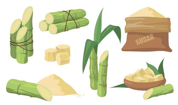 Zuckerrohr und zuckerset. packung mit grünen stielen, pflanzen mit blättern, sack mit braunem zucker auf weißem hintergrund. illustrationssammlung für landwirtschaft, rum, schnapsproduktionskonzept. Kostenlosen Vektoren