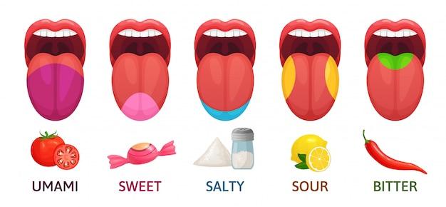Zungengeschmacksbereiche. süßer, bitterer und salziger geschmack. umami und saure geschmacksrezeptoren diagramm cartoon vektor-illustration Premium Vektoren