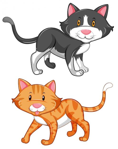 Zwei süße katzen auf weißem hintergrund Kostenlosen Vektoren