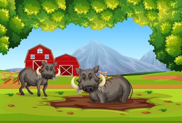 Zwei warzenschwein in der natur Premium Vektoren