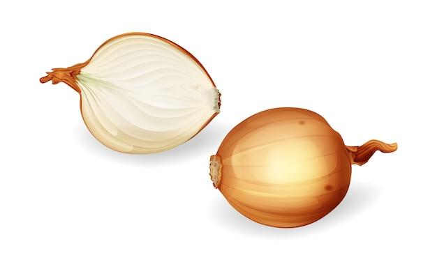 Zwiebelbirne und geschnittener halber satz. gelbe ungeschälte zwiebeln, frische natürliche bio-lebensmittel. Kostenlosen Vektoren