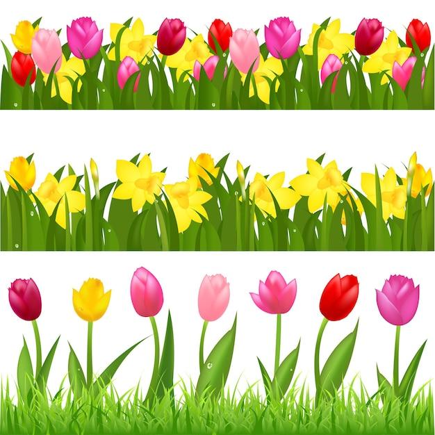 3 bordas de flores de tulipas e narcisos, isoladas no fundo branco, Vetor Premium
