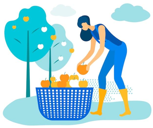 A mulher no macacão azul dobra maçãs na cesta. Vetor Premium