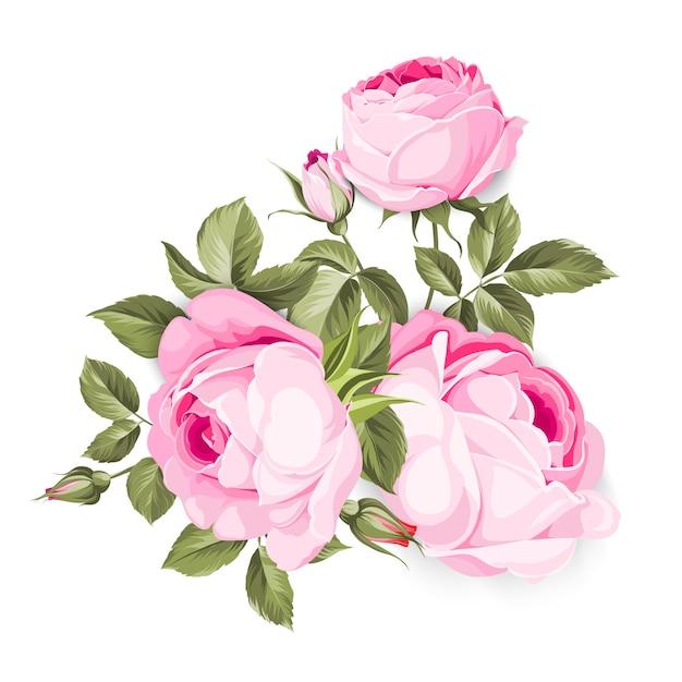 A rosa de florescência. Vetor Premium