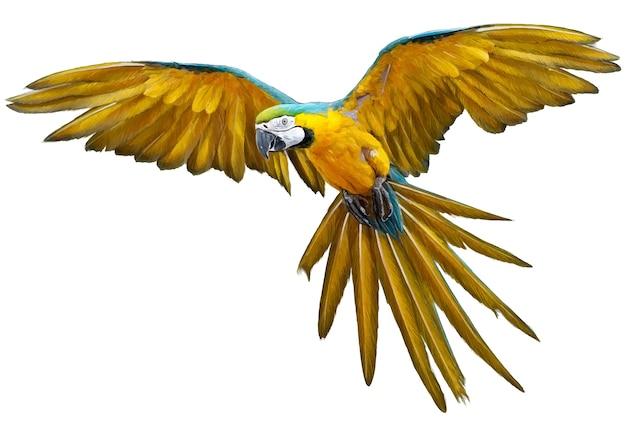 A tração da mão do voo do papagaio e a pintura amarelas no branco. Vetor Premium