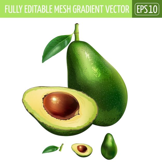 Abacate ilustração em branco Vetor Premium