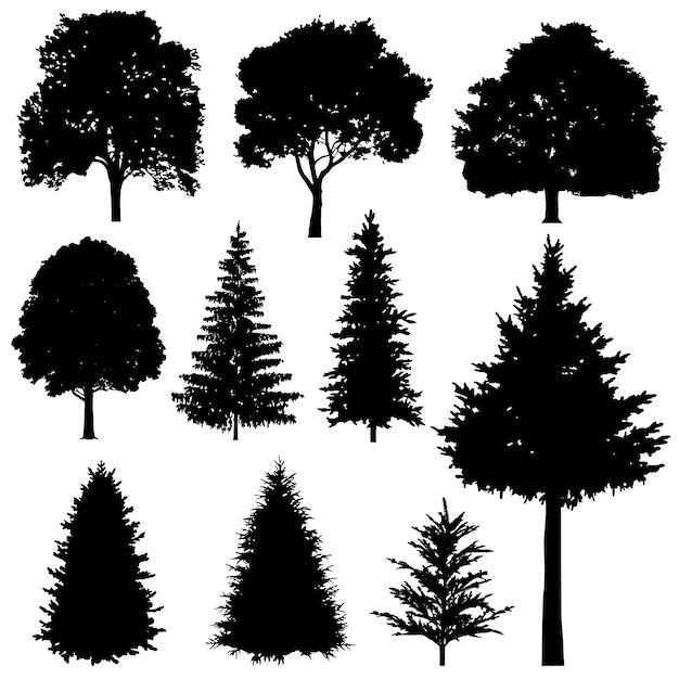 Abetos coníferas e decíduas floresta vector conjunto de silhuetas Vetor Premium
