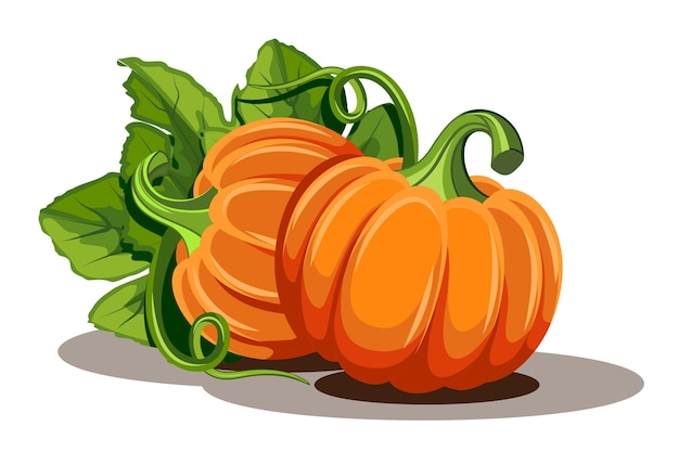 Abóboras com folhas em fundo branco. ilustração abóbora laranja madura - abóbora para o halloween, festival da colheita de outono ou dia de ação de graças. legumes ecológicos. Vetor Premium
