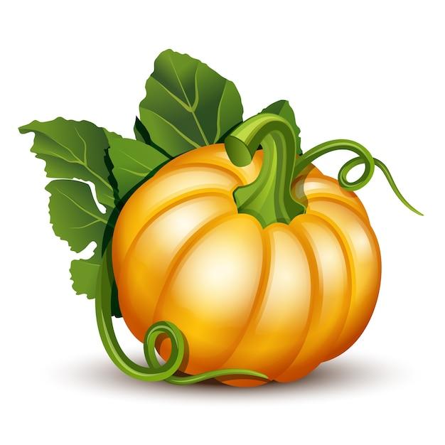 Abóboras com folhas isoladas no fundo branco. ilustração abóbora laranja madura - abóbora para o halloween, festival da colheita de outono ou dia de ação de graças. legumes ecológicos. Vetor Premium