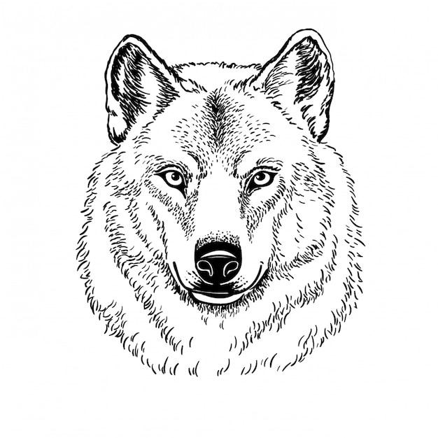 Açaime o lobo isolado no fundo branco, ilustração. Vetor Premium