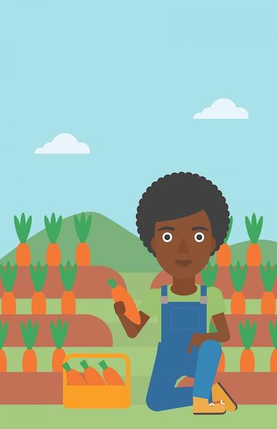 Agricultor coletando cenouras Vetor Premium