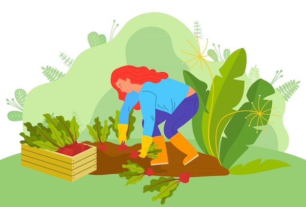 Agricultura mulher com beterraba agricultora na fazenda Vetor Premium