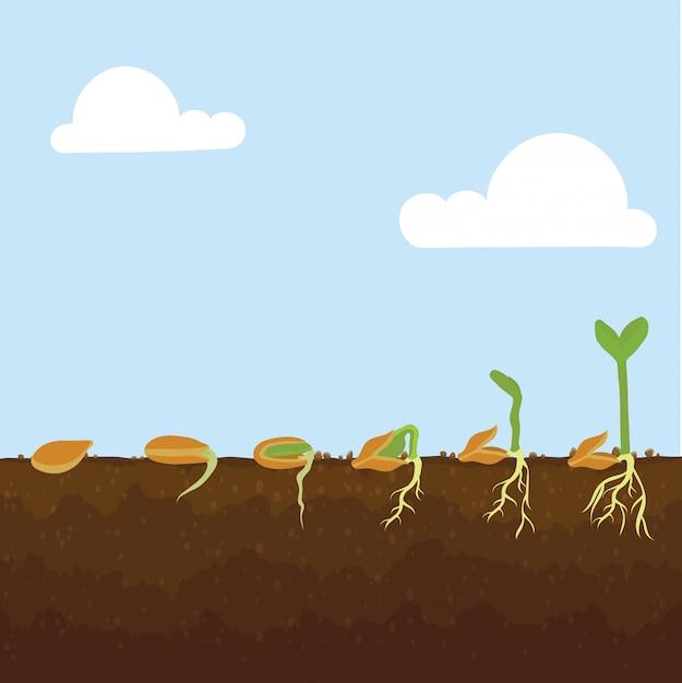 Agricultura Vetor Premium
