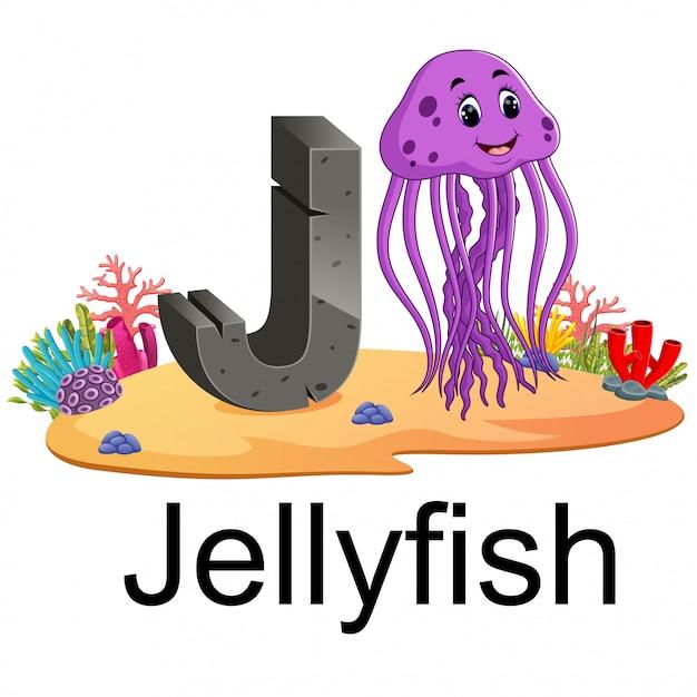 Alfabeto animal zoológico bonito j para medusas com animal real Vetor Premium