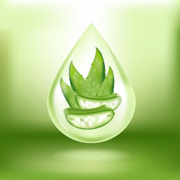 Aloe vera com gotas frescas de água Vetor Premium