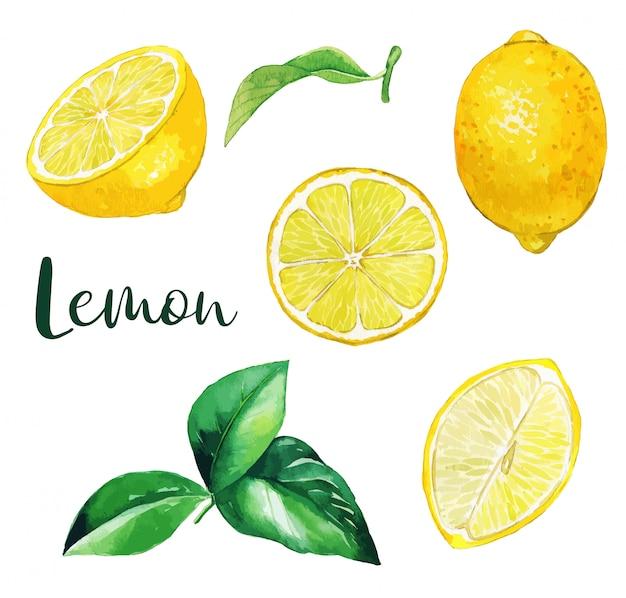 Amarelo limão frutas e folhas, frutas em aquarela Vetor Premium