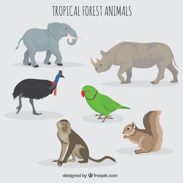 Animais da floresta e selvagens Vetor grátis