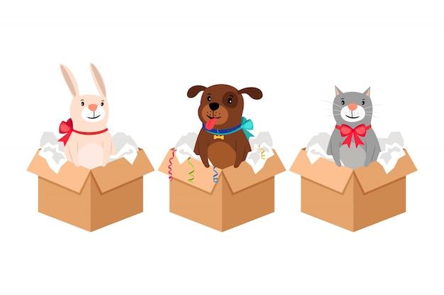 Animais de estimação em caixas Vetor Premium