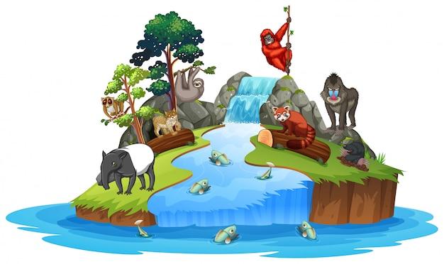 Animais na cena da ilha Vetor Premium