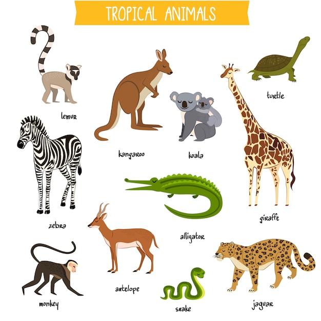 Animais tropicais definir ilustração vetorial isolado Vetor Premium